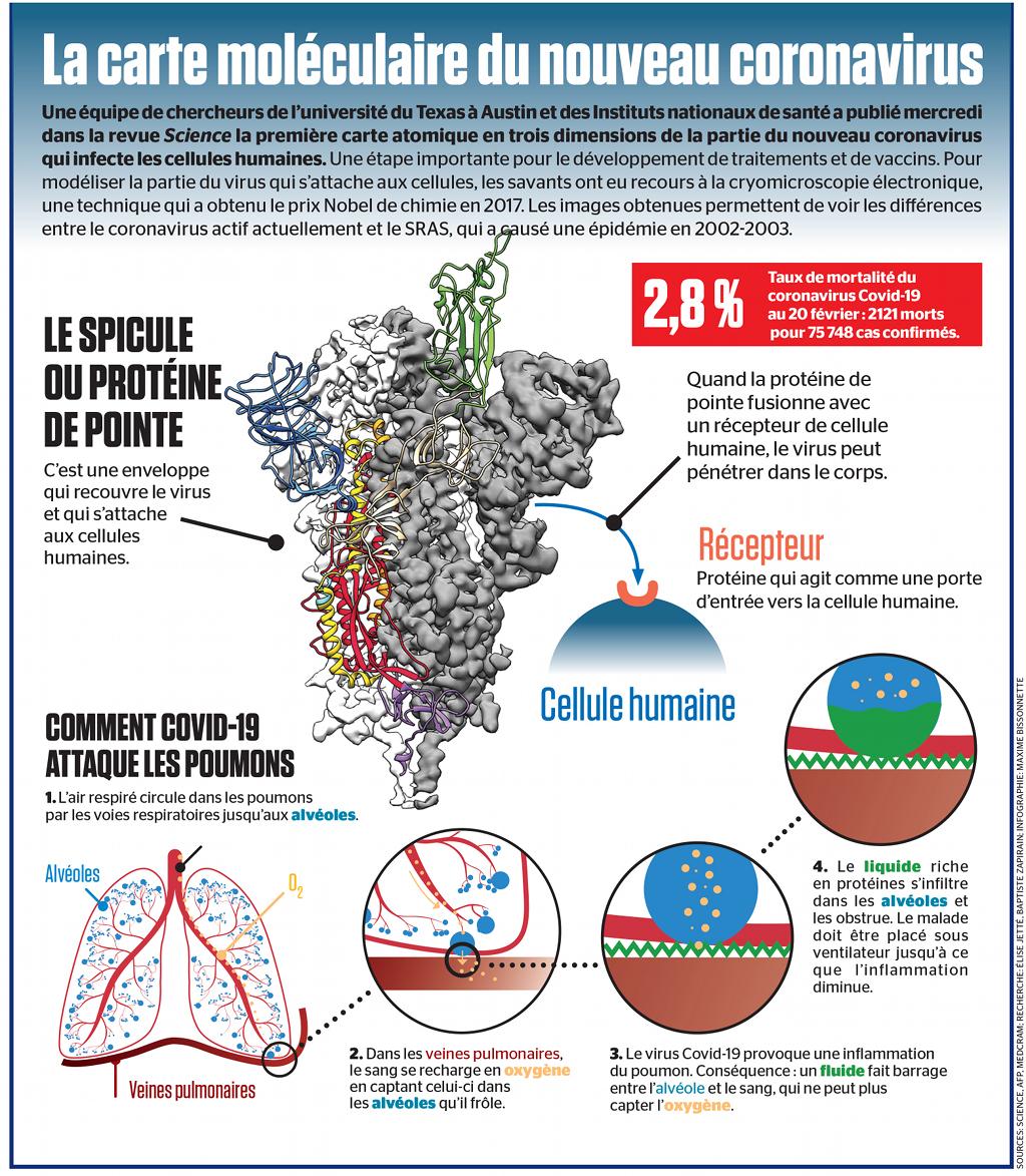 La carte moléculaire du nouveau coronavirus SRAS-COV-2