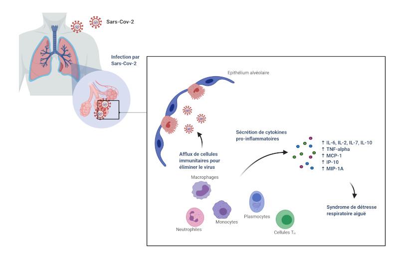 Réponse immunitaire à l'infection par le SRAS-COV-2