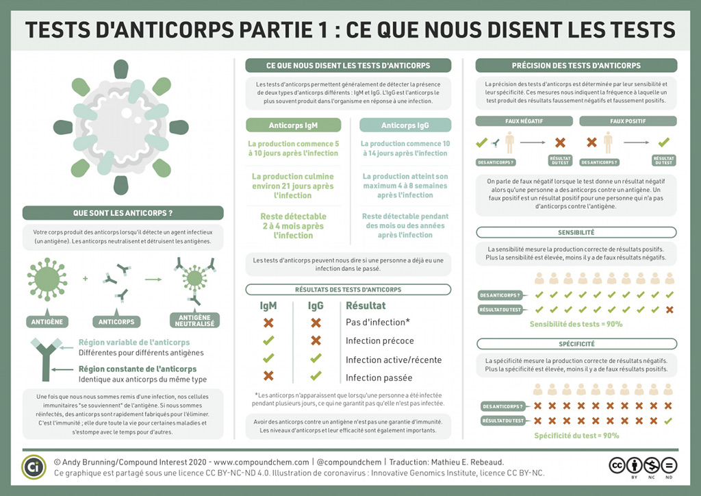 Tests d'anticorps : ce que nous disent les tests