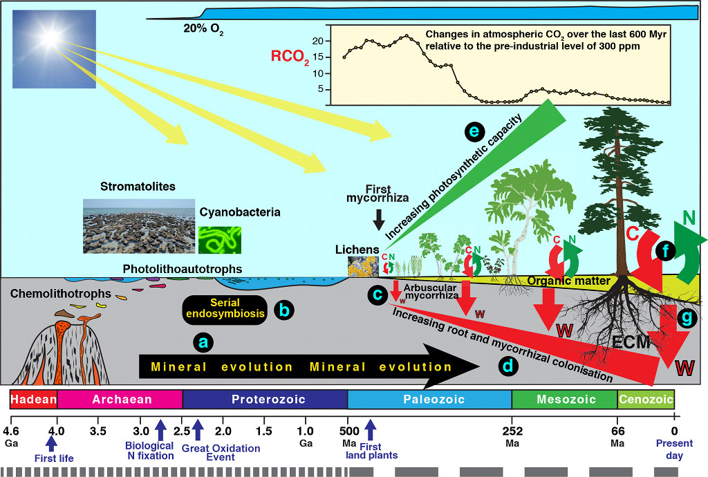 Altération et décomposition des minéraux par processus biologiques